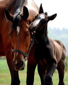 Horse and foal, so sweet.