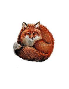 Curled Fox - Original watercolor fox painting