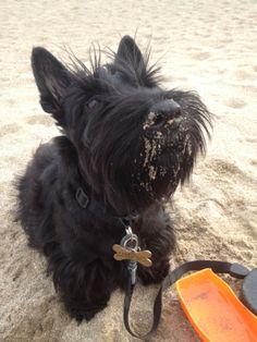 Fabi with a Sandy Nose