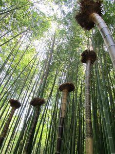 2013 - Anduze: la Bambouseraie