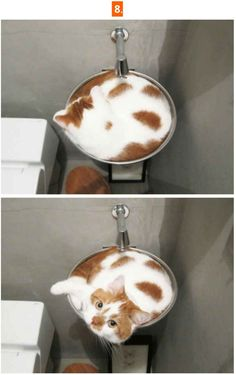 Catpuccino funny pictures sayings jokes really funny - Catpuccino funny pictures sayings jokes really funny - Funny Animal Jokes, Funny Cat Videos, Cute Funny Animals, Funny Animal Pictures, Animal Memes, Cute Baby Animals, Funny Cute, Cute Cats, Funny Pics