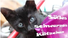 Kleines süßes schwarzes Baby Kätzchen - SchwarzeKatze_BlackCat
