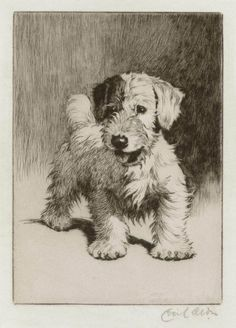 A Sealyham Terrier (Bunch?) etching by Cecil Aldin circa 1910 for sale on Sebra Prints Animal Sketches, Animal Drawings, Art Drawings, Fox Terriers, Illustrations, Illustration Art, Sealyham Terrier, Dog Portraits, Sketches