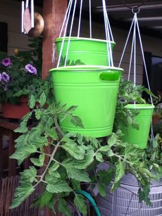 Home made upside down tomato planter- brilliant! My brother came up with this idea. Dollar Tree plastic buckets with a hole cut into the bottom, fille… - All About Gardens Growing Tomatoes, Small Plants, Tomato, Planters, Tomato Farming, Types Of Tomatoes, Tomato Growers, Upside Down Tomato Planter, Container Gardening