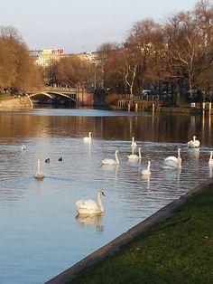 swans - Berlin