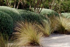 New country landscape design ornamental grasses ideas Coastal Gardens, Beach Gardens, Outdoor Gardens, Landscape Edging Stone, Landscape Design, Garden Design, Bush Garden, Gravel Garden, Garden Beds