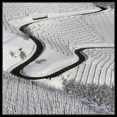 Langhe snow cover, Piedmont- Italy