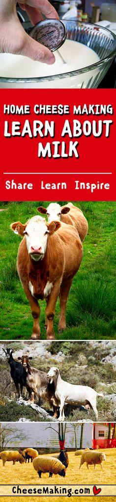 Milk & Cream FAQ | How to Make Cheese | Cheesemaking.com