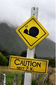 Snail crossing - Westport on the west coast of the South Island of New Zealand. If you travel there