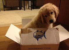 This puppy was excited about his Southern Tide order that came in just in time for Christmas!