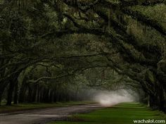 Just imagine to drive your car, or even better motorbike, on this beautiful roads. Driveway Landscaping, Country Landscaping, Modern Landscaping, Landscaping Tips, Landscape Photos, Landscape Design, Beautiful Roads, Beautiful Places, Nature