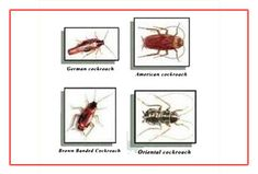 The best pest control service provider in Hinjewadi is Balaji citi pest control. Our service of pest control in Hinjewadi is fast, effective and reliable service that offers a high level of safety with herbal treatment that ensures complete safety of your family and pets. General disinfestation is an ultimate process of eliminating the rodent, termite or any other disease causing insects within your facility.