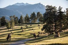 Busy day at the golf course  in Estes Park