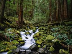 Brook in Sol Duc River Valley Photographic Print at Art.com
