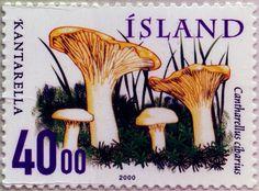 Cantharellus cibarius, Islandia