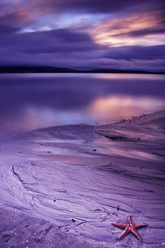 Early Morning Sadness, Nature shot on shades of purple Purple Love, All Things Purple, Shades Of Purple, Purple Beach, Purple Sunset, Purple Stuff, Beautiful Places, Beautiful Pictures, Beautiful Sunset