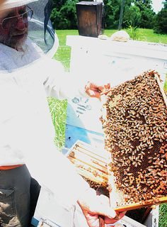 Keeping Bees around the world