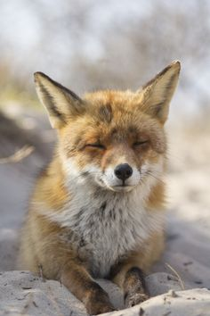 500px / Fox On The Beach by Angela Louwe