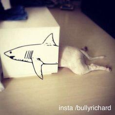 Shark Bullie http://projectbullterrier.co.uk/