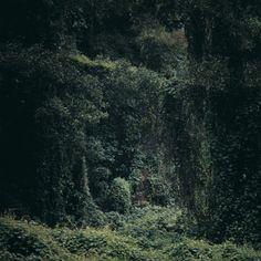 Daniel Gustav Cramer, Untitled (Woodland), 2006
