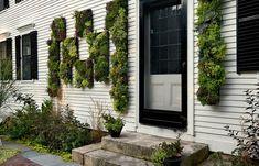 Outdoor house facade vertical garden