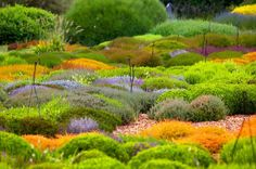 Garden design by Gary Ratway - Photo by Claire Takacs. - A pity the sprinklers are there but the planting is like a carpet. Meadow Garden, Dream Garden, Modern Landscaping, Garden Landscaping, Beautiful Landscapes, Beautiful Gardens, Bloom Where Youre Planted, Garden Architecture, Garden Landscape Design