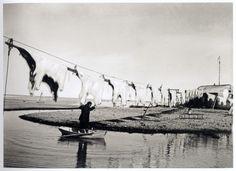 Просушка шкур белых медведей, Северная Земля, 1930 год.