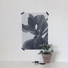 Succulent Plant print - By Garmi