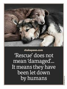 Adoption is the only pets I adopt.wish I could save all the dogs let down by humans. Shelter Dogs, Animal Shelter, Rescue Dogs, Rescue Dog Quotes, Pet Quotes, Shelters, Funny Quotes, Smile Quotes, Yorkies