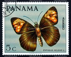 PANAMA - CIRCA 1968: a stamp printed in the Panama shows Skipper Butterfly, Entheus Peleus, Butterfly, circa 1968 — Photo by Boris15