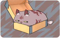 Dormir en cajas: | 15 escandalosas verdades detrás de lo que en realidad quieren decir los comportamientos de los gatos