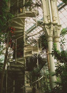 The Palmenhaus Schönbrunn is a large greenhouse in Vienna, Austria, featuring plants from around the world Stairway To Heaven, Interior Exterior, Interior Garden, Glass House, Stairways, Botanical Gardens, Future House, Beautiful Places, Beautiful Forest