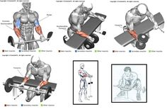 Workout Experiences Chest:  Triceps:  Biceps:  Shoulders:   Back:  Legs:   Abs:  Others:     Fitness Workouts, Fitness Gym, Weight Training Workouts, Fit Board Workouts, Wellness Fitness, Muscle Fitness, Mens Fitness, At Home Workouts, Bodybuilding Training