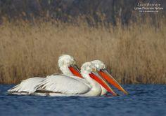 Danube Delta, Freshwater Fish, Bird Species, Continents, Romania, Fresh Water, Exotic