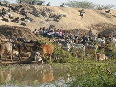 Ahmedabad, Landwirtschaft,  Gujarat.