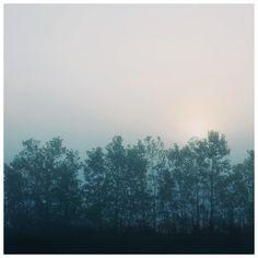 Cobalt - Fine Art Photograph - Alicia Bock