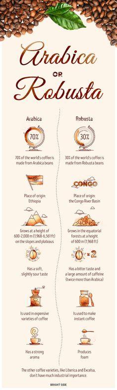 Подробен пътеводител на кафето | High View Art
