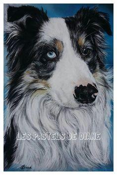 Jake, chien Berger Australien, pastels secs