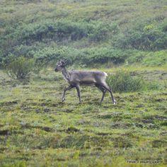 denali_national_park_alaska