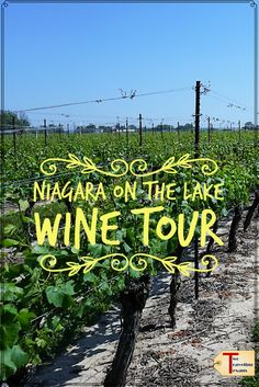Learn about biggest wine region in Canada, the best wineries in Niagara on the Lake, and why you must try ice wine! | Wine Tasting | Ontario via @2travelingtxns #winetasting #niagaraonthelake