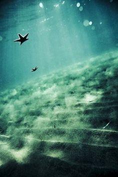floating star fish