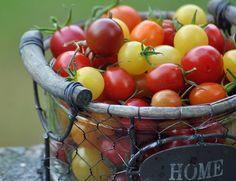 www.tomatprat.blogspot.com   Cherry tomatoes