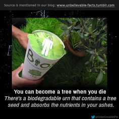 You can become a tree when you die There's a biodegradable urn that contains a tree seed and absorbs the nutrients in your ashes.