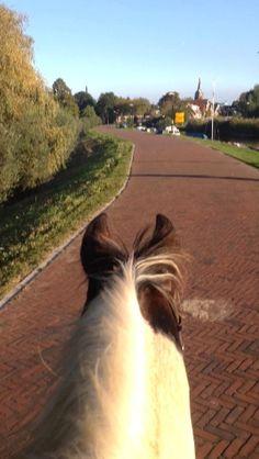 Paardendagje #100happydays #day93
