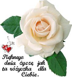 Wiersze,Gify Na Dzień Dobry ...: Gify Pięknego dnia Good Morning, Rose, Flowers, Plants, Pictures, Buen Dia, Photos, Pink, Bonjour