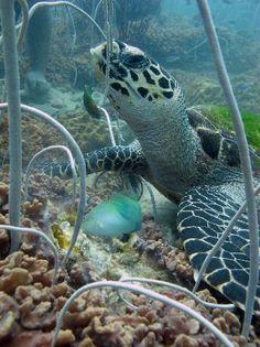 Sea turtle on Koh Chang