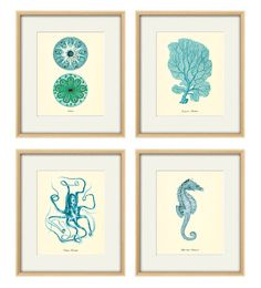 Ocean Decor Natural History art print & MORE | Antique Wall Art