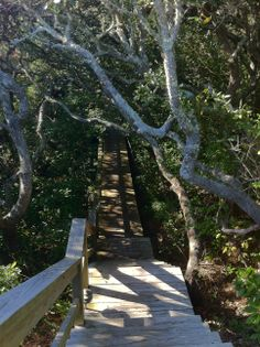 Through the woods to the beach! Pawleys Island, SC