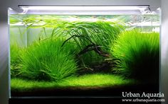 Urban Aquaria love the large grasses