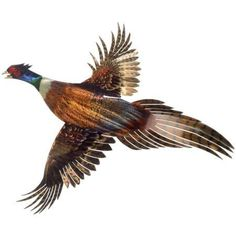 3D Pheasant Metal Wall Art By Next Innovations, Brown